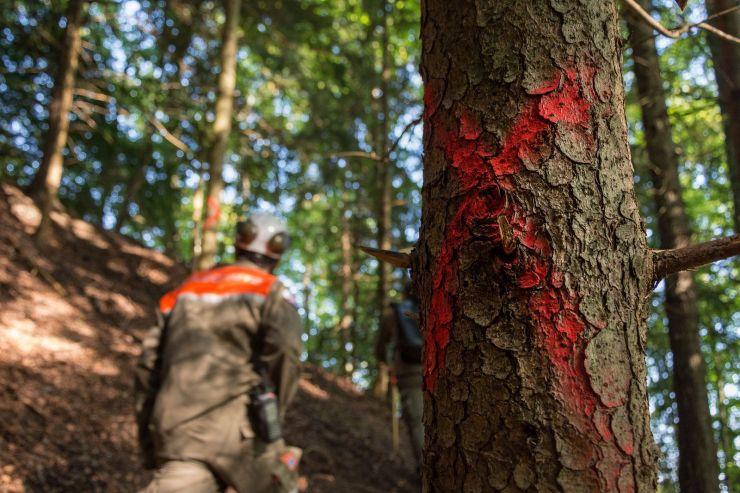 Die Zivilschützer als Wegbereiter im Hinderbachwald